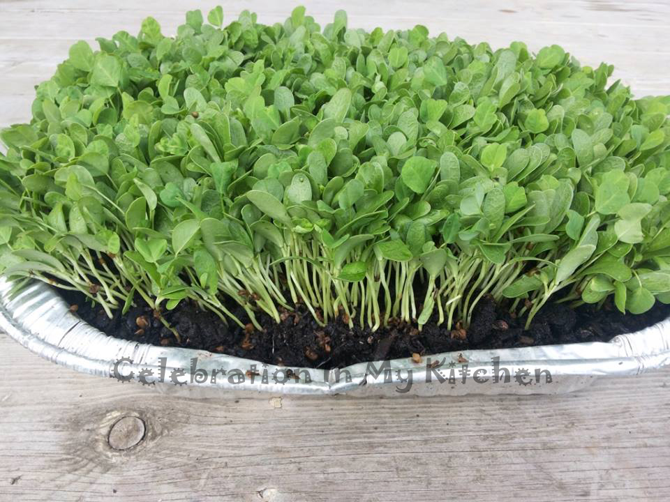 Baby Fenugreek Greens or Methi